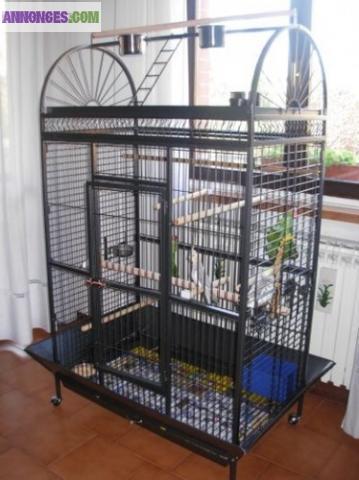 voliere gris du gabon cage perroquet cage ara amazone. Black Bedroom Furniture Sets. Home Design Ideas